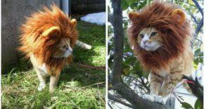 Un déguisement de lion pour chat