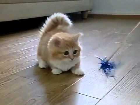 Un chat très mignon