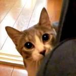 Ce chat est un véritable ninja !