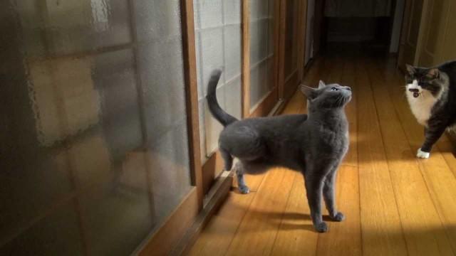 Deux chats super agaçants !