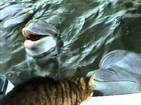 Un chat joue avec un dauphin