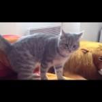 Un chat fait une roulade de ninja !