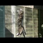 Le saut d'un chat au ralenti