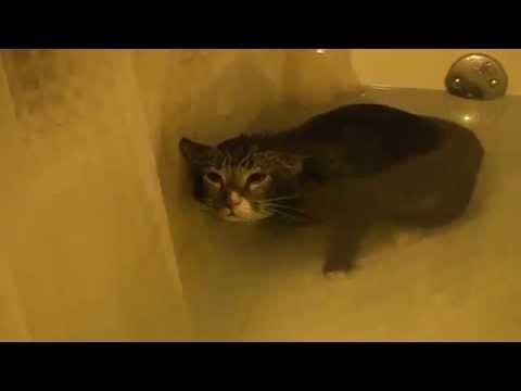 Un chat miaule dans une baignoire