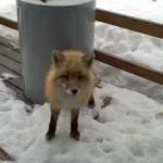 Un chat, un renard et un aigle sous un porche