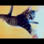 Ce chat saute à une hauteur hallucinante !