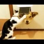 Les chats peuvent être vraiment marrants (mais aussi des co*****)