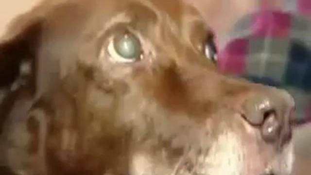 Un chien aveugle est guidé par un chat