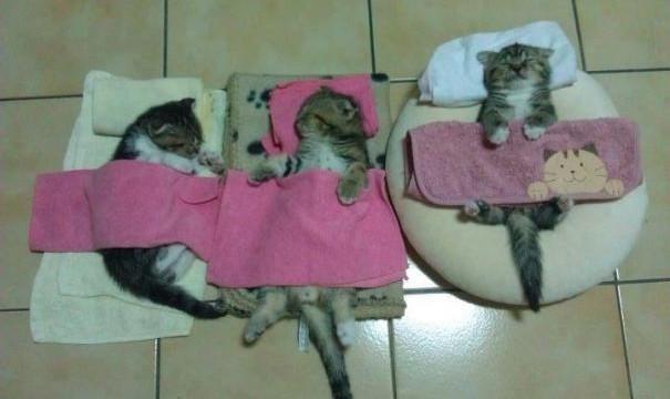 Des chatons dorment dans des draps