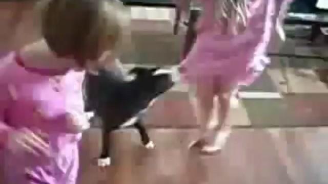 Un chat protège une petite fille contre un chien