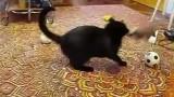 Un chat joue avec une hermine