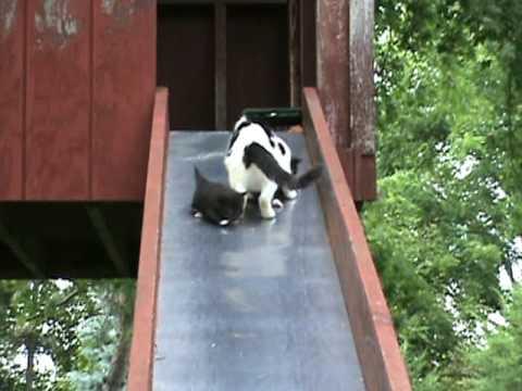 Des chatons glissent sur un tobbogan