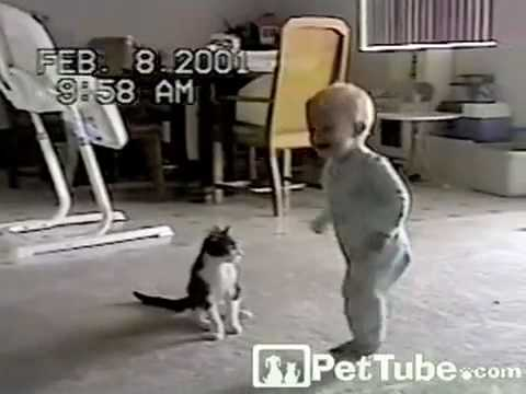 Un chat se bat avec un bébé