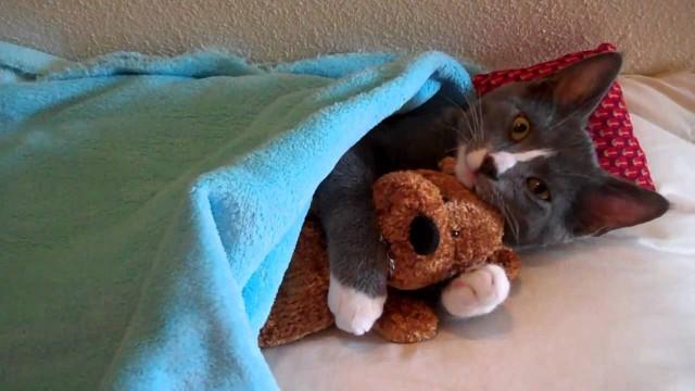 Un chat fait un calin à un ours en peluche