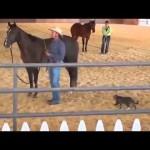 Un chat ninja attaque un cheval