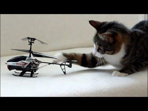 Un chat se bat contre un hélicoptère télécommandé