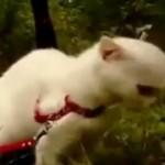 Un chat qui a peur et FAIT peur