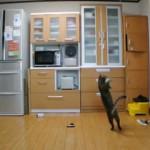 Un chat gardien de but !