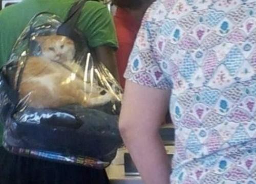 Un chat dans un sac à dos transparent