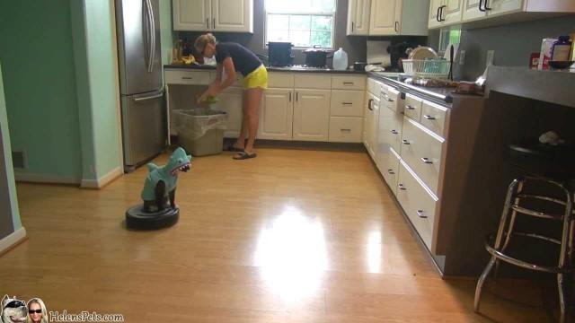 Un chat déguisé en requin sur un aspirateur Roomba