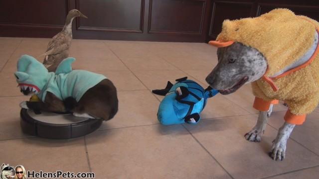 Un canard déguisé en requin, un chien déguisé en canard