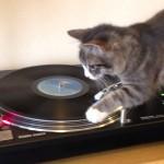 Un chat scratche sur un vinyl