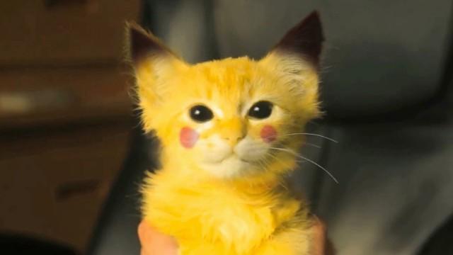 Transformer un chaton en Pikachu