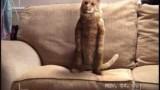 Un chat danse dans une publicité pour Royal Mail