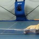 Un chat joue au Ping Pong