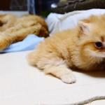 Une attaque de chaton !