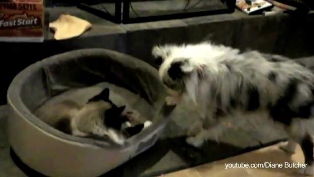 Des chats qui volent le panier de chiens
