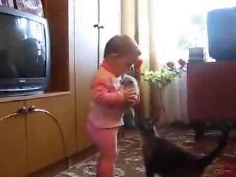 Une maman chat veut vraiment récupérer son chaton