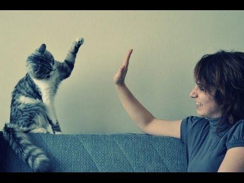 Une compilation de chats qui font des high five !