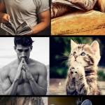 Des chats imitent des mannequins hommes