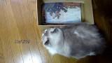 Un chat entre dans une boîte