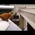 Waffles le chat glisse sur la neige et tombe