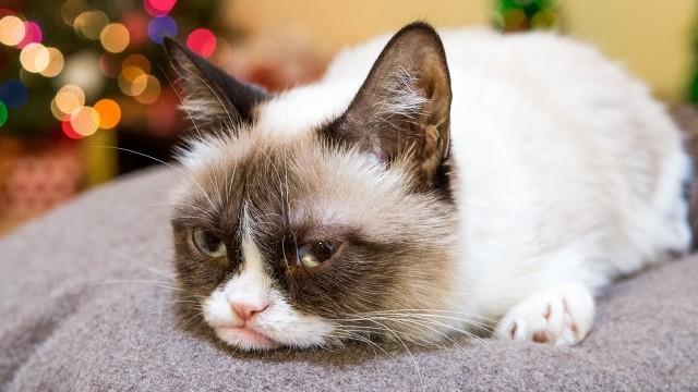 Tous les chats stars d'Internet réunis dans une publicité pour Friskies