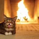 Bub le chat dort près de la cheminée