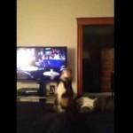 Un chat fait une chute marrante