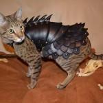 Un déguisement d'armure pour chat