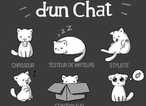 Le CV d'un chat