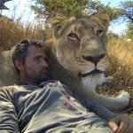Un homme fait des calins à des lions en GoPro