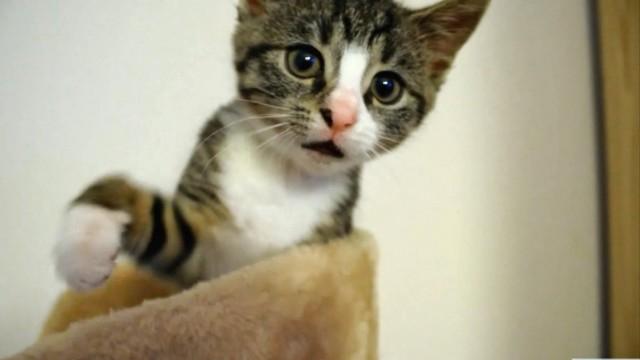 Compilation de chats qui miaulent et ronronnent