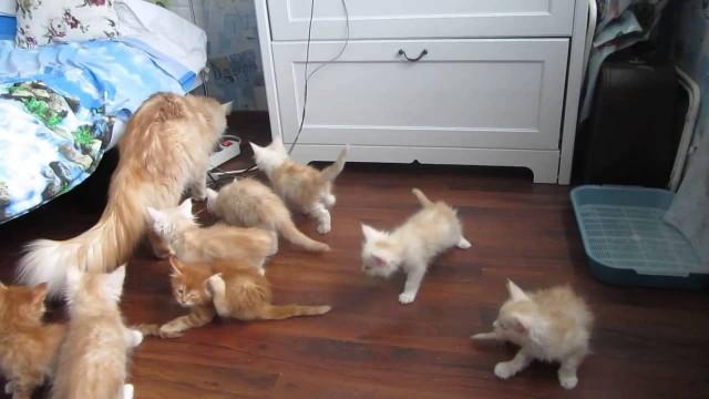 Comment réagissent des chatons qui ont peur ?