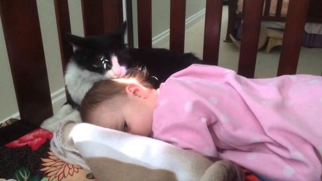 Un chat lèche affectueusement la tête d'un bébé !