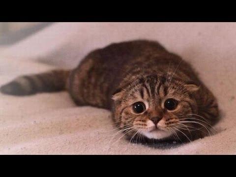 Quelle tête fait un chat quand il se sent coupable ?