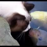 Un chat joue (gentiment) avec un poisson