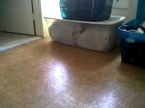 Un chat glisse sur le sol et se coince entre deux caisses