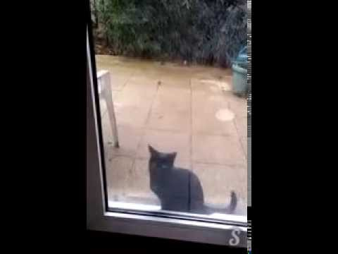 Un chat fait BIEN comprendre à son maître qu'il veut rentrer
