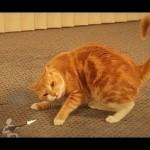 Un chat se bagarre contre une armée de papier